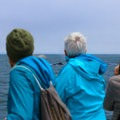 Whale watching tours are often able to get close to whales while still keeping a safe distance.- Santa Cruz Whale Watching