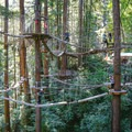 The Sequoia Aerial Adventure almost looks reminiscent of an Ewok Village in its forested complexity.- Mount Hermon Aerial + Zipline Adventures