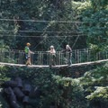 A sky bridge along the Redwood Canopy Tour course.- Mount Hermon Aerial + Zipline Adventures