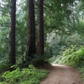 The Skyline to the Sea Trail is wide with a gradual uphill slope, and it extends from the coast into a lush creek valley with stands of coast redwoods.- Alder Trail Camp