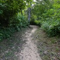 A short trail leads back to site 6, the most secluded camp site.- Alder Trail Camp