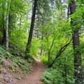 The Mickinnick Trail.- Mickinnick Trail