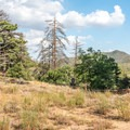 The trail winds through Jeffrey pine forest cover.- Desert View Trail via Burnt Rancheria Campground