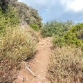 The trail joins the PCT and gently ascends to the overlook.- Desert View Trail via Burnt Rancheria Campground