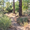 View of the trail.- Desert View Trail via Burnt Rancheria Campground