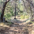 There is plenty of shade to be found along this trail.- Desert View Trail via Burnt Rancheria Campground
