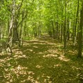 A short section of the walking paths leads to the dedicated bike trails.- Ludington School Forest Trails