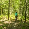 The trails meander through open forest.- Ludington School Forest Trails