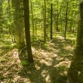 A typical trail view.- Ludington School Forest Trails