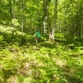 Open patches in the forest are filled with ferns.- Ludington School Forest Trails