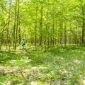 The trails are mostly level.- Ludington School Forest Trails