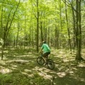The shady trails are great on a hot day.- Ludington School Forest Trails