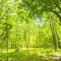 Coming around a corner in the Ludington School Forest Trails.- Ludington School Forest Trails