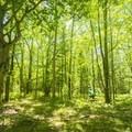 Enjoying the open forest trails.- Ludington School Forest Trails