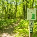 A map along the trail.- Ludington School Forest Trails