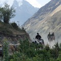 Mules coming back from dropping supplies off at the lodge.- Salkantay Trek to Machu Picchu
