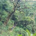 The lush jungles just beneath Salkantay along the Rio Teresa.- Salkantay Trek to Machu Picchu