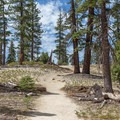 The dry trail covered with pine cones as you near North Dome. - North Dome + Indian Rock Via Porcupine Creek Trailhead
