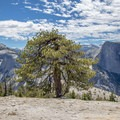 A lonely tree flanked by Cloud's Rest and Half Dome. - North Dome + Indian Rock Via Porcupine Creek Trailhead