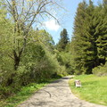 Entrance to the stream trail.   - Redwood Regional Park