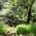 Stream along the Stream Trail.- Redwood Regional Park