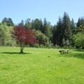 Main meadow with a cherry plum tree and a barbecue and picnic table.  - Redwood Regional Park