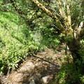 The stream along the Stream Trail. - Redwood Regional Park