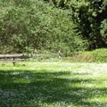 One of many meadows along the Stream Trail with a picnic table. - Redwood Regional Park