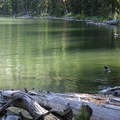 A group of goldeneye ducks call Crescent Lake their summer home.- Crescent Lake Hike via Specimen Creek Trail