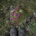 Mossy blooms.- Summit Ridge Trail