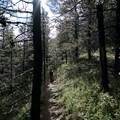 Forest section.- Mount St. Paul via Summit Peak Trail