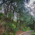 The trail starts behind the parking area.- Pali Notches