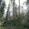 Hiking through the forest.- Fort Nelson's Demonstration Forest