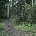 Trail through the boreal forest. - Fort Nelson's Demonstration Forest