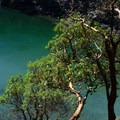 Arbutus trees are ubiqutous on the island, with some of the highest density on the coast. - Lasqueti Islands Coast Paddle