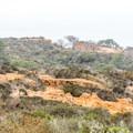 Torrey Pines on a foggy morning.- Razor Point Trail