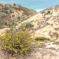Wildflowers blooming along the trail.- Razor Point Trail