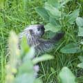 A porcupine feeds in Ludington State Park.- Ludington State Park