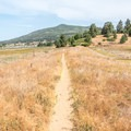 The trail heads north toward Cuyamaca Lake.- Minshall Trail to Stonewall Mine Loop