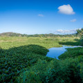 The trail makes its way down to the edge of the marsh.- Na Pohaku o Hauwahine