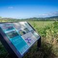 Interpretive signs explain the history of the marsh.- Na Pohaku o Hauwahine