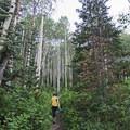 Hiking the Iron Canyon Trail.- Iron Canyon Trail