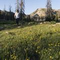 Wildflowers along the Wall Lake Loop.- Wall Lake Loop