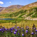 Harebell flowers dancing in the wind.- Kite Lake