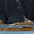 Seals in the sun.- Toleak Point