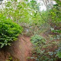 Follow an overgrown drainage ditch up to where it meets the main trail.- Pali Notches