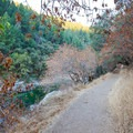 The trail to Spring Creek keeps a generally level course, however washouts and root systems can create some technical terrain.- Spring Creek Trail