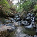 Spring Creek makes for some good exploring and has several picturesque cascades along its course.- Spring Creek Trail
