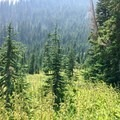 Small meadow area.- Three Fingered Jack Loop