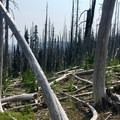 Traveling off-trail through the burn area isn't all fun.- Three Fingered Jack Loop